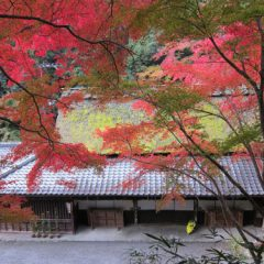 Bicycle tours of Kyoto Japan