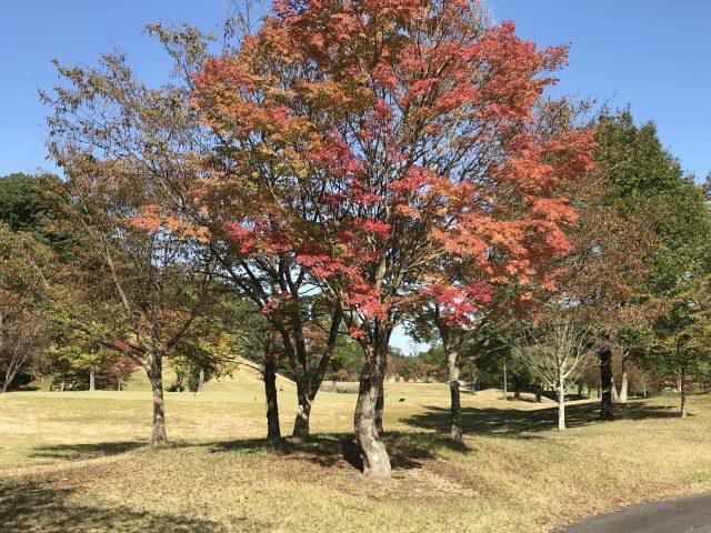 高知で初開催!弊社主催ゴルフコンペが産経新聞に掲載されました!