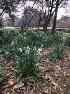 Shinjuku Gyoen Gardens Consulting Visit by JI Core 50